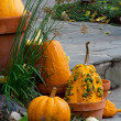Natural fall decorations — Stock Photo
