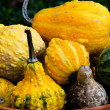 Stockfoto: Decorative gourds in a clay pot