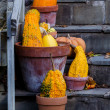 Decorative gourds in terra cotta pots — Stock Photo