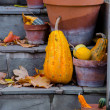 图库照片: Decorative gourds and fall leaves