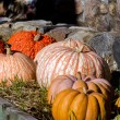 Pumpkin  and gourd display along a stone wall — Stock Photo #38236329