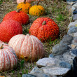 Pumpkin display outdoors with stone wall — Stock Photo