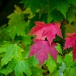 Autumn's first color — Stock Photo #38236401