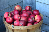 Bushel of Michigan  apples — Stock Photo