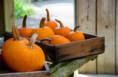 Rustic fall  pumpkins in boxes — Stock Photo