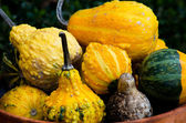 Decorative gourds in a clay pot — Stock Photo