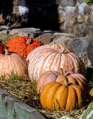 Pumpkin  and gourd display along a stone wall — Stock Photo