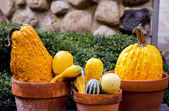 Pumpkin  and gourd display — Stock Photo