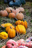 Pumpkin display — Stock Photo