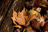 Fall leaves and old wood — Stock Photo