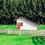 Farn house — Stock Photo #46124781