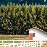 Small farm house — Stock Photo #46124791