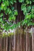 Plant wall — Stock Photo