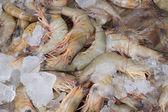 Fresh sea food — Stock Photo