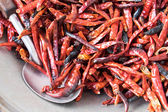 Dried chilli — Stock Photo