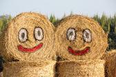 Happy hay — Stock Photo