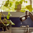 Indoor Plant asking for little bit of water — Stock Photo
