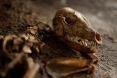 Old Abandoned Dog Skeleton on the ground — Stock Photo