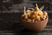 Chickpeas Sprouts in a Wooden bowl — Stock Photo