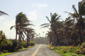 Palm Trees on the side of the Road — Stock Photo