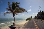 路边的棕榈树 — 图库照片