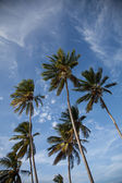 Palm Trees and Blue Sky — Stockfoto