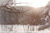 Winter wonderland — Zdjęcie stockowe