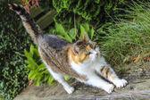 Beautiful photogenic cat — Stock Photo