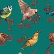 Seamless pattern with birds — Stock Photo