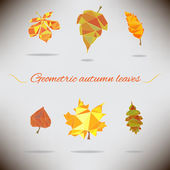 Ensemble de feuilles de l'automne géométriques colorés — Vecteur