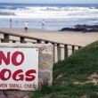 No dogs — Stock Photo