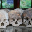 Killing Fields — Foto de Stock