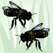 Two Hand Drawn Bees  — Imagen vectorial