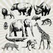 Set of Exotic Animals — Stock Vector