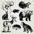 Wild Animals Hand Drawn — Stockvectorbeeld