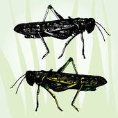 Grasshoppers — Stock Vector