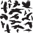 20 images of ravens — Stock Vector