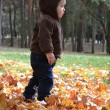 Baby boy in autumn leaves in the park — 图库照片