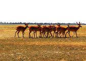 "The reserve ""Ascania Nova"" — Stock Photo"