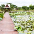 Stock Photo: Thailand pavilion beside lotus pond