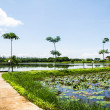 Stock Photo: Pathway on lotus pond