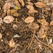 Dry leaves texture on ground — Stock Photo