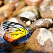 Butterfly at the river — Stock Photo