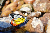 Butterfly at the river — Stockfoto