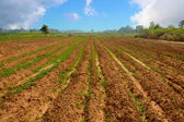 Agricultural field soil — Stock Photo