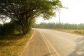 Tree on the road — Stock Photo