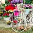 Stock Photo: Bicycle Florist