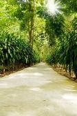 Street  trees — Stock Photo