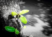 Plant seedlings — Stock Photo