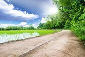 Road meadow — Stock Photo